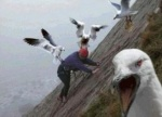 angry-birds-not-as-much-fun-in-real-life
