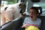 Scared-kid-horse