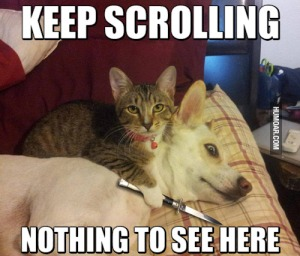 keep-scrolling-nothing-to-see-here
